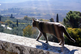 A.cat.tuscany.flowerwall.flickr
