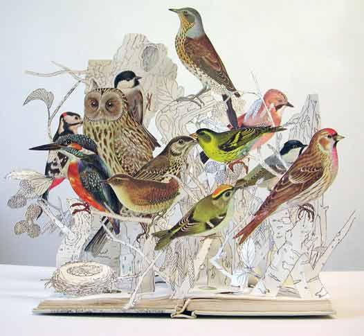 2008-illustrative-book-of-birds