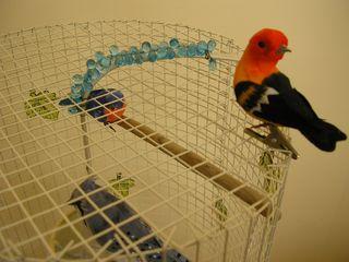 Birds (1)
