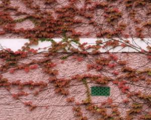 Monets_wall